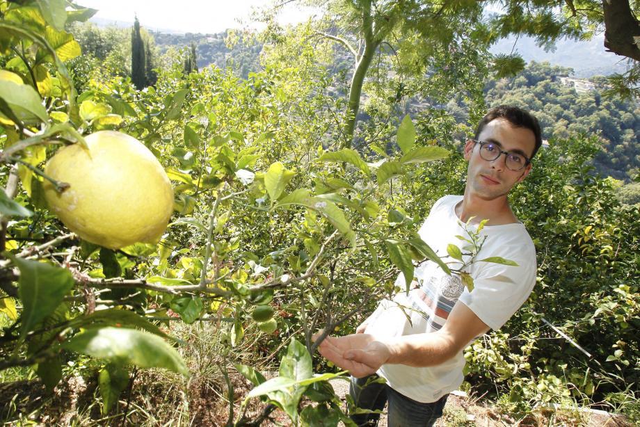 L'agrumiculteur Adrien Gannac.