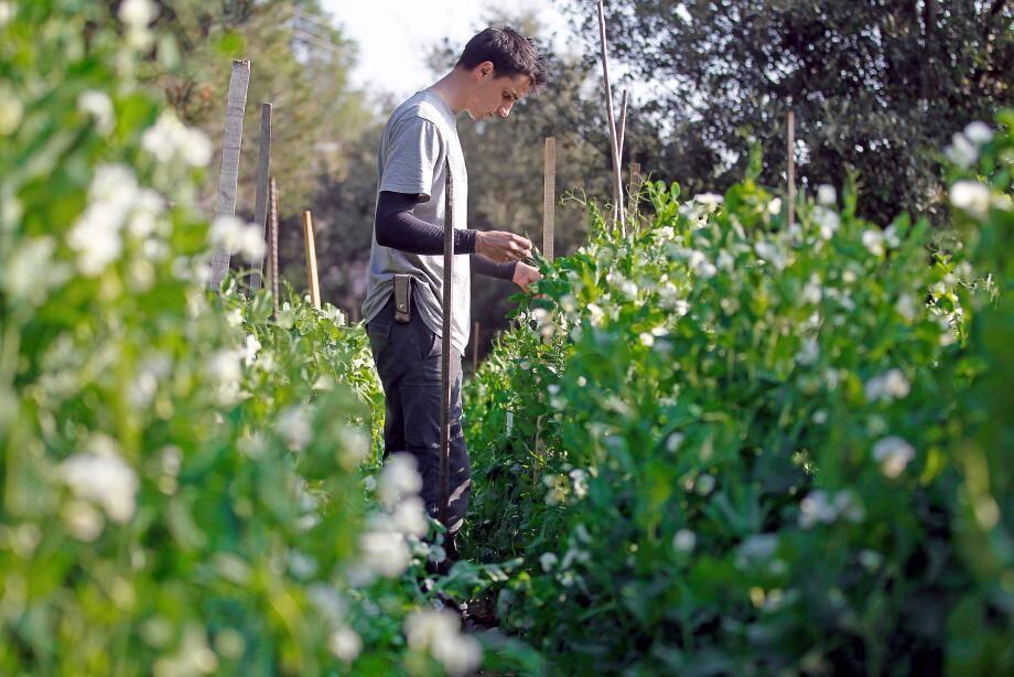 Les pesticides sont les premiers perturbateurs endocriniens consommés.