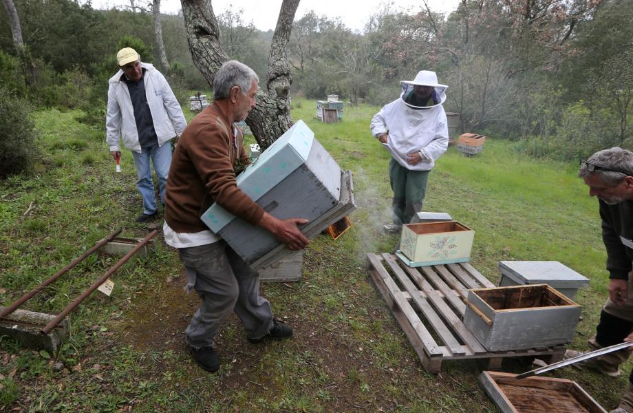 Jacques Poujol, président de la section est-varois du rucher école, et son équipe initient bénévolement les amateurs du secteur à l'art de l'apiculture.