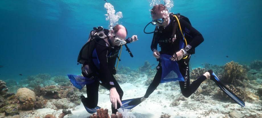Le prince Albert lors d'une plongée sous-marine.