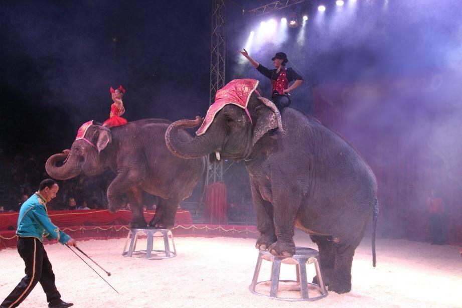 Deux éléphants en représentation dans un cirque.