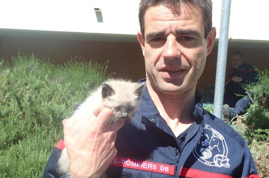 Le chaton, sauvé par les pompiers de Valbonne.