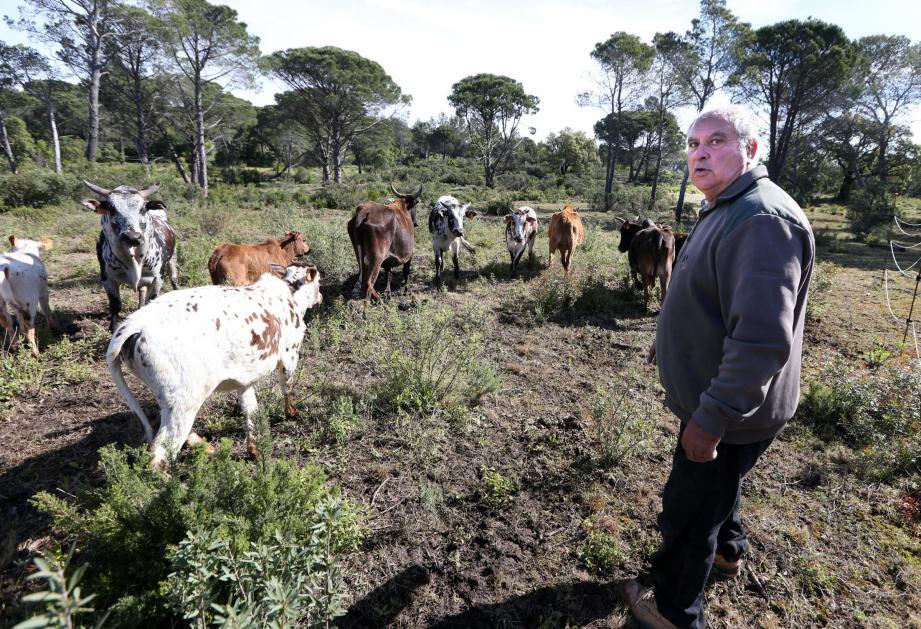 Les vaches débroussailleuses de Roger Pastor.