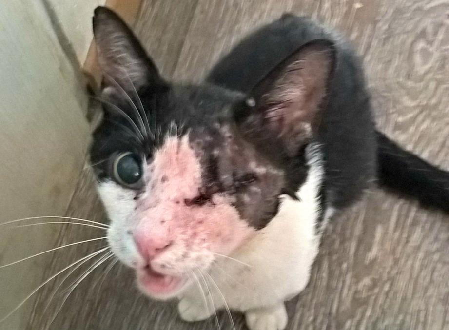Félix est devenu aveugle à la suite de cet acte barbare.