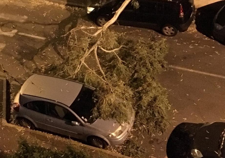 La branche n'a causé que des dégâts matériels.
