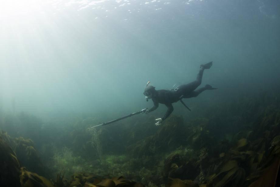 Illustration d'un plongeur.