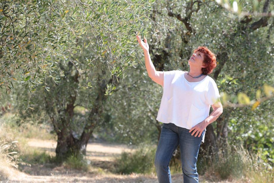 Jacqueline Bellino possède 150 oliviers centenaires aux Prés fleuris, à L'Escarène.