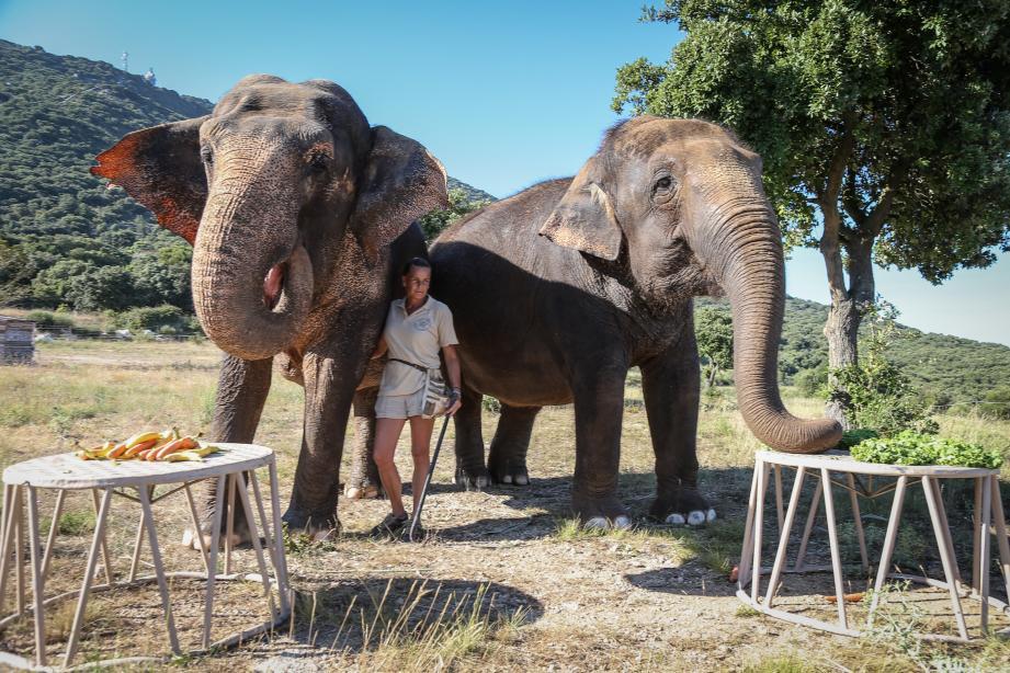 La princesse Stéphanie, qui s'occupe au quotidien des éléphantes, a montré aux invités, les moments particuliers de leur quotidien.