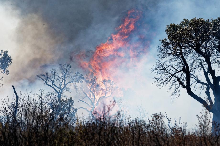L'incendie dans le secteur de Bormes-les-Mimosas, cet été.