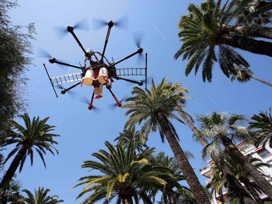 Un drone pour lutter contre le charançon rouge.