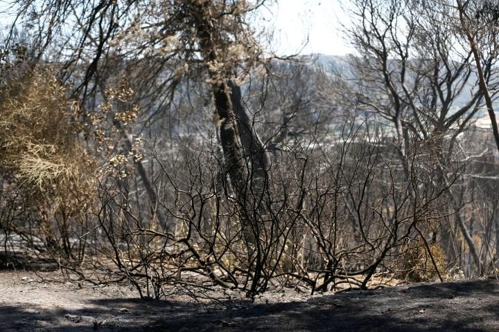 Un incendie a ravagé près de 90 hectares à Carros, ici le 26 juillet 2017. (MaxPPP TagID: maxmatinarch148039.jpg) [Photo via MaxPPP]
