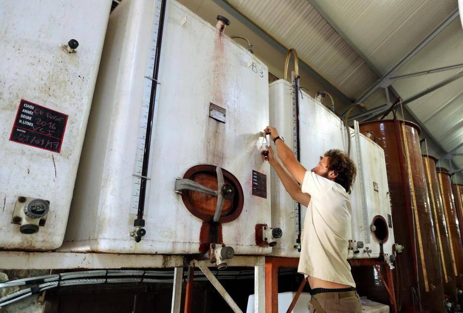 Dès que les raisins ont été pressés et mis en cuve, les premières dégustations permettent d'établir un profil pour les différents vins.