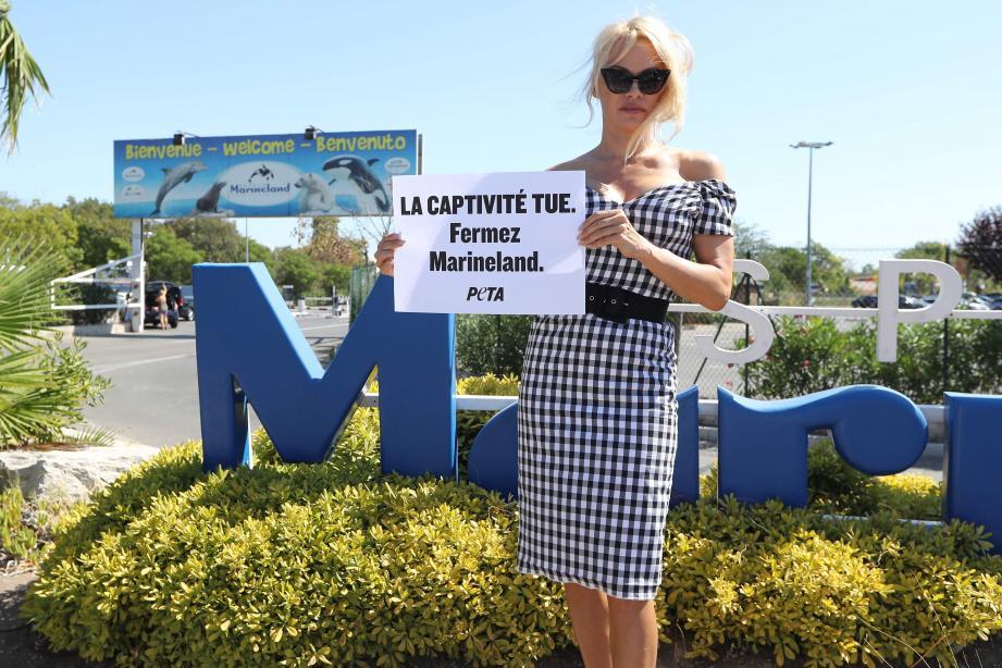 Pamela Anderson s'est installée, hier, toute seule devant Marineland, à Antibes.
