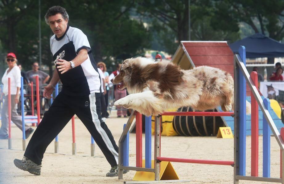 Depuis 10 ans. ce concours d'agility voit concourir des chients venant de toute la France et même de l'étranger.