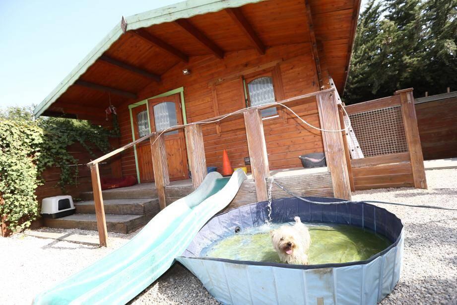 Un chalet entièrement climatisé avec jardin et piscine extérieure pour les petits gabarits : chez Dog sitting, l'hébergement est synonyme de cadre de vie sympathique et de vacances pour les animaux en pension estivale.