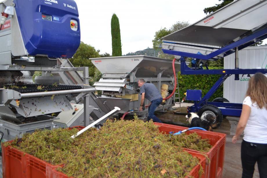 À partir de 2 h du matin, Alain Terrier (en haut) manœuvre la machine pour la récolte dans les vignes. Les grains passent ensuite dans l'érafloire et le fouloir, sous le contrôle du chef de culture (en bas à d.).