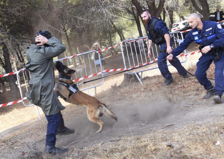 Les chiens sont entraînés dans un terrain de la basse vallée de la Siagne.