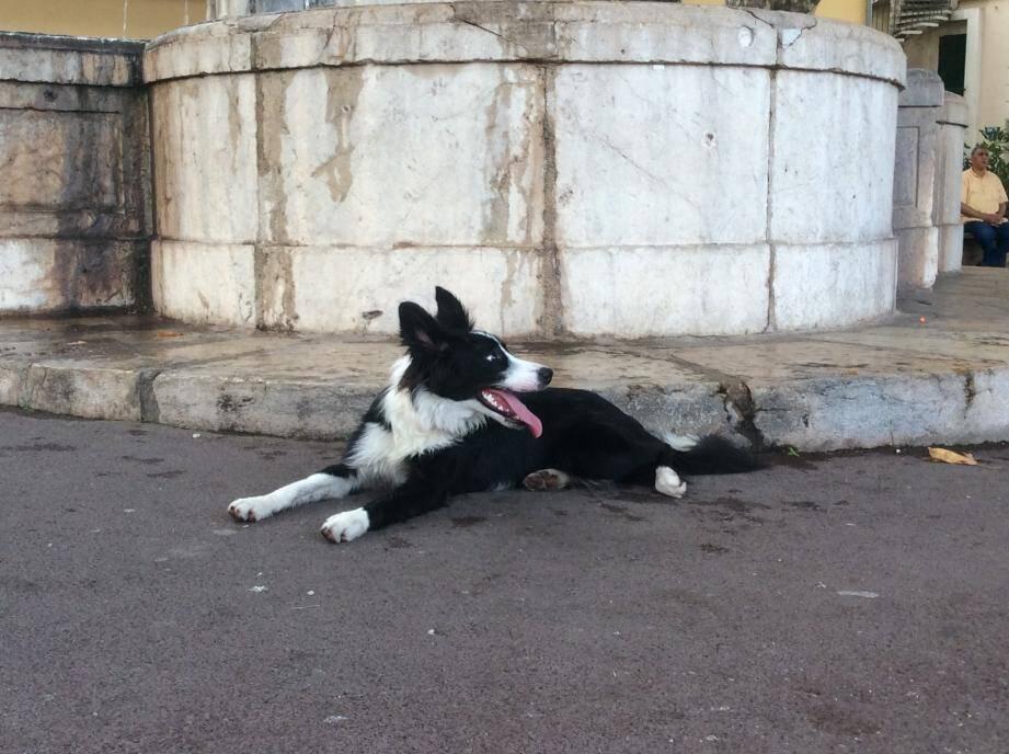 Un an tout pile, un poil noir et des chaussettes blanches... Voici Mia, qui a ses nombreux fans, de passage ou pas, dans la vieille ville.