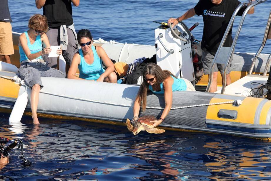 La tortue marine était soignée au centre du cap d'Antibes.