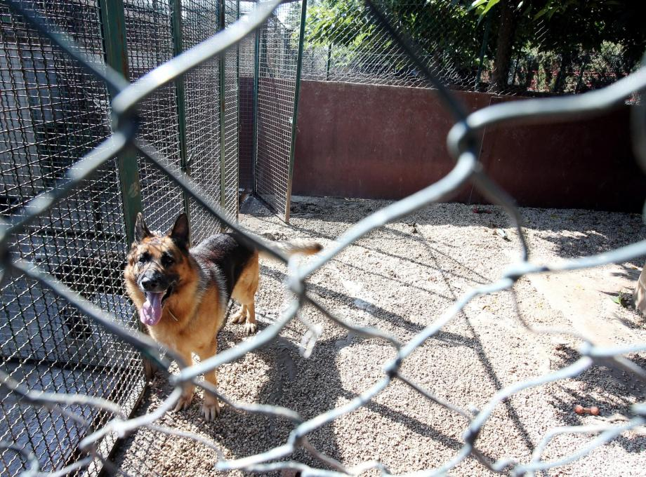 Laisser son chien dans une garderie, l'été, vaut mieux que l'abandon pur et dur…