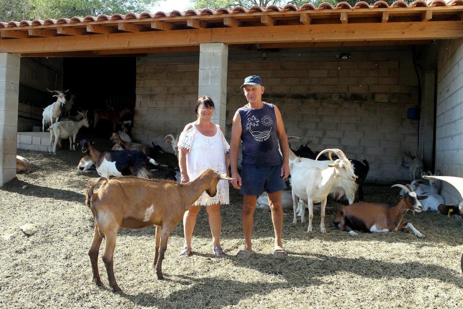 Christine et Roger s'occupent avec passion de leurs 185 chèvres.