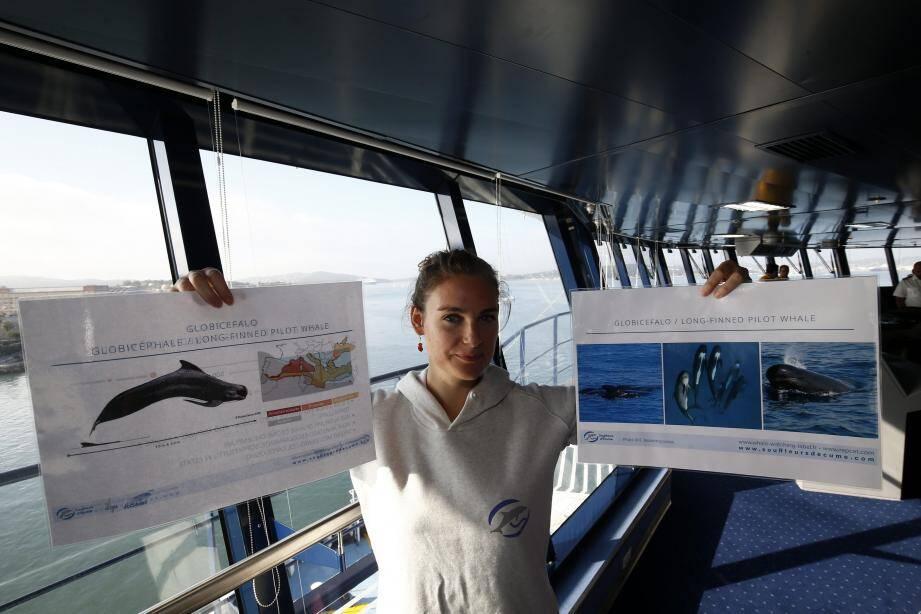 L'utilisation du dispositif Repcet a été expliquée à l'équipage du Pascal Lota, cette semaine. Lorsque le navire aperçoit une baleine , il le signale sur le logiciel. L'info est ensuite transmise via une antenne satellite placée sur le bateau . Le signalement apparaît alors sur une carte partagée, consultable en temps réel .