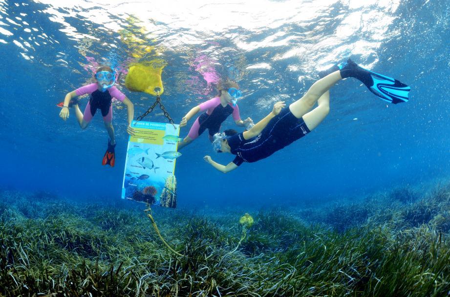 Le collectif a finalisé une méthode qui combine la découverte du patrimoine, l'éducation à l'environnement et la participation du citoyen aux données scientifiques.Ci-dessus : plongeurs sur l'îlot du Crocodile à La Croix-Valmer.