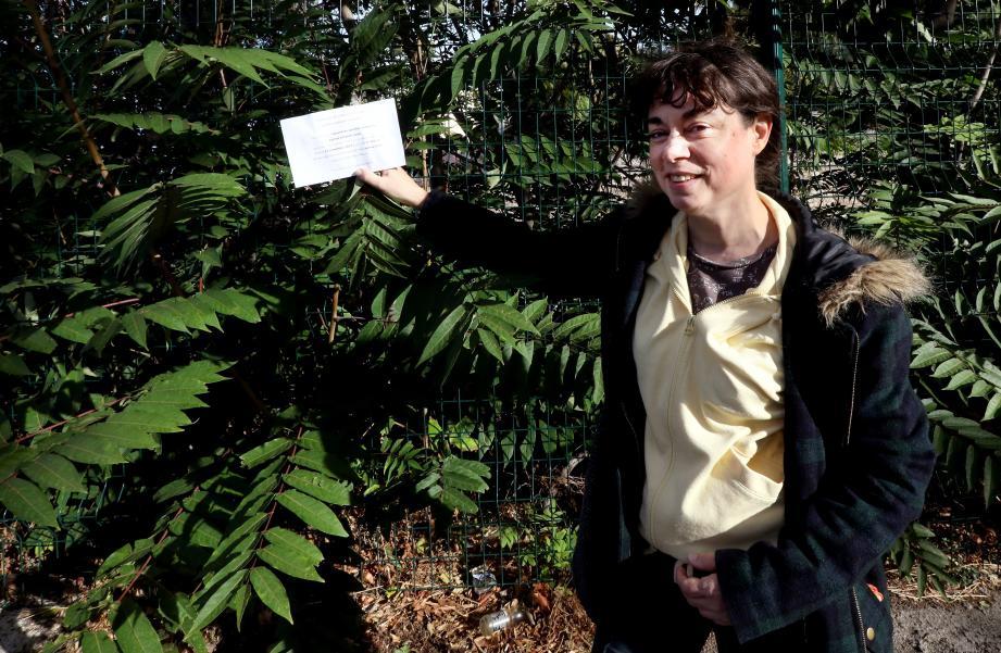Le 14 septembre, à l'occasion du comité d'intérêt local du Champ de Mars-Cuzin-La Colette, Catherine André a amené le problème des ailantes devant les élus, dont Michel Bonnus, adjoint aux espaces verts.