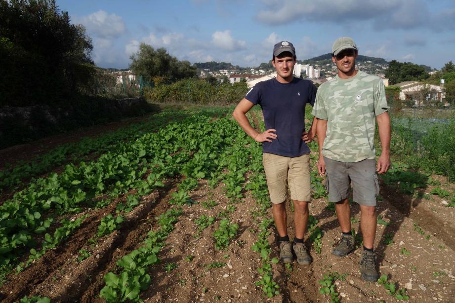 À la tête de la ferme Bres, Julien et Cédric (photo du haut à gauche) pratiquent l'agriculture raisonnée en plein cœur de la cité avant de procéder à la vente directe de leurs produits fermiers.
