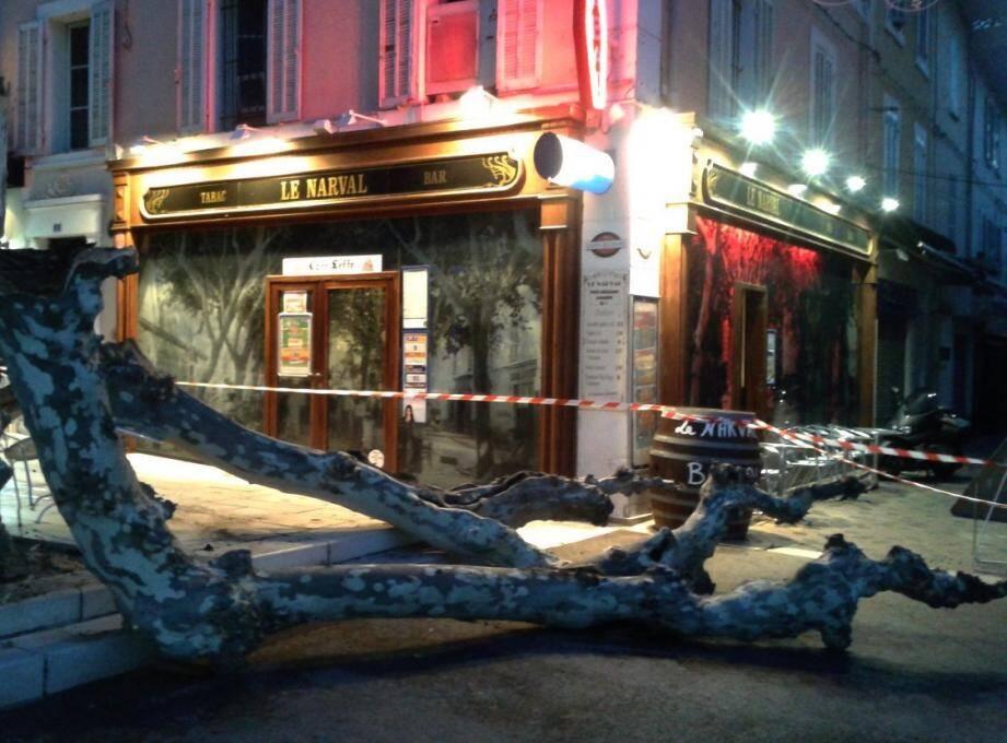 Janvier 2016 : une branche maîtresse du platane situé sur la place de la Liberté, à Bandol, s'est abattue sur la terrasse du bar Le Narval. L'arbre a dû être abattu.