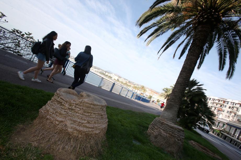 Au-dessus de Castel Plage, les palmiers ont dû être abattus.