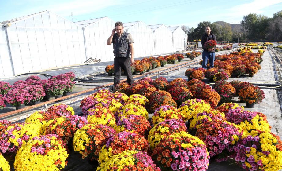 """Eddy et Brahim, les deux dirigeants de Z Plants au milieu des chrysanthèmes """"tendances"""" cette année: les multicolores."""