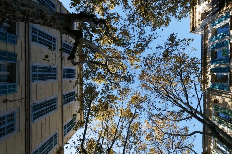 Les services techniques de la ville suspectent la présence de champignons (chancre coloré) sur deux arbres. Une possible infestation qui oblige à revoir la planification des travaux destinés à rénover et mettre aux normes le cours Louis-Blanc.