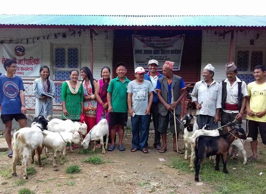 Au-delà de reconstructions aux normes parasismiques, les investissements ont permis la production de fourrage pour les chèvres ou l'achat de boucs ou de semences.