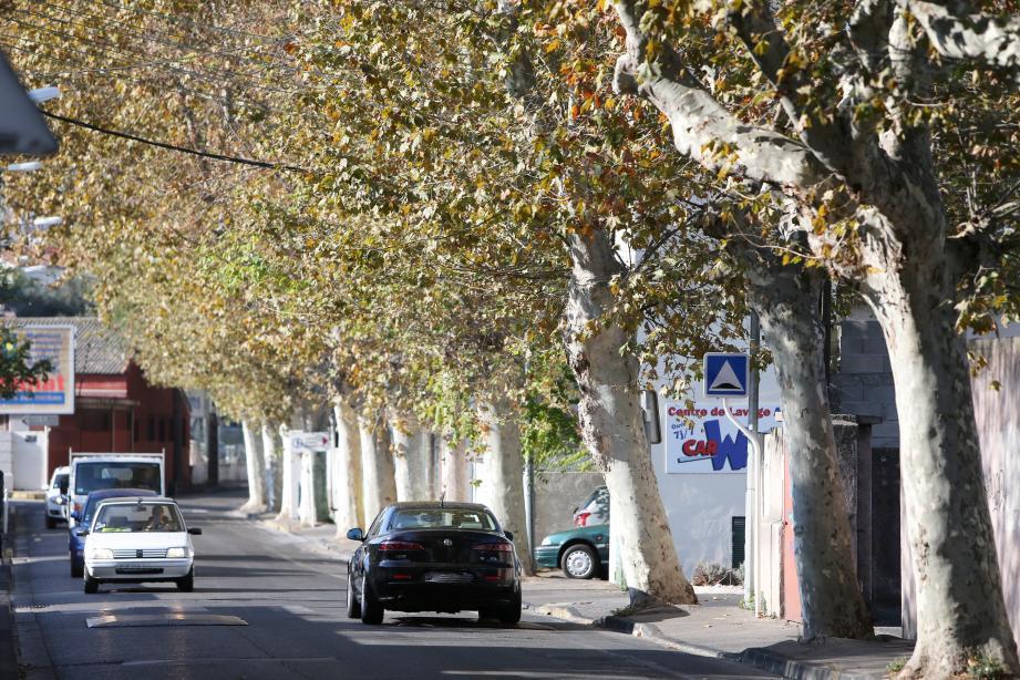 Les grands travaux de la requalification de l'avenue Général Pruneau, à l'horizon 2018-2019, sur le secteur du CIL de la Serinette débuteront par l'abattage ce mois-ci des platanes pour sécuriser le cheminement piétonnier.