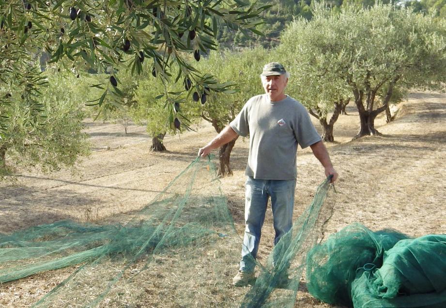 Première étape : Jean-Louis dispose les filets qui vont recueillir les fruits.