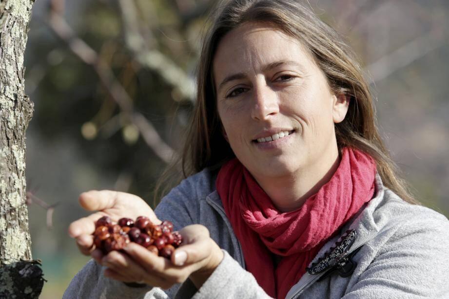 Sur son exploitation, Émilie Robat cultive près de 700 jujubiers. Mais aussi des fraisiers, des feijoas des amandiers, et des olives.