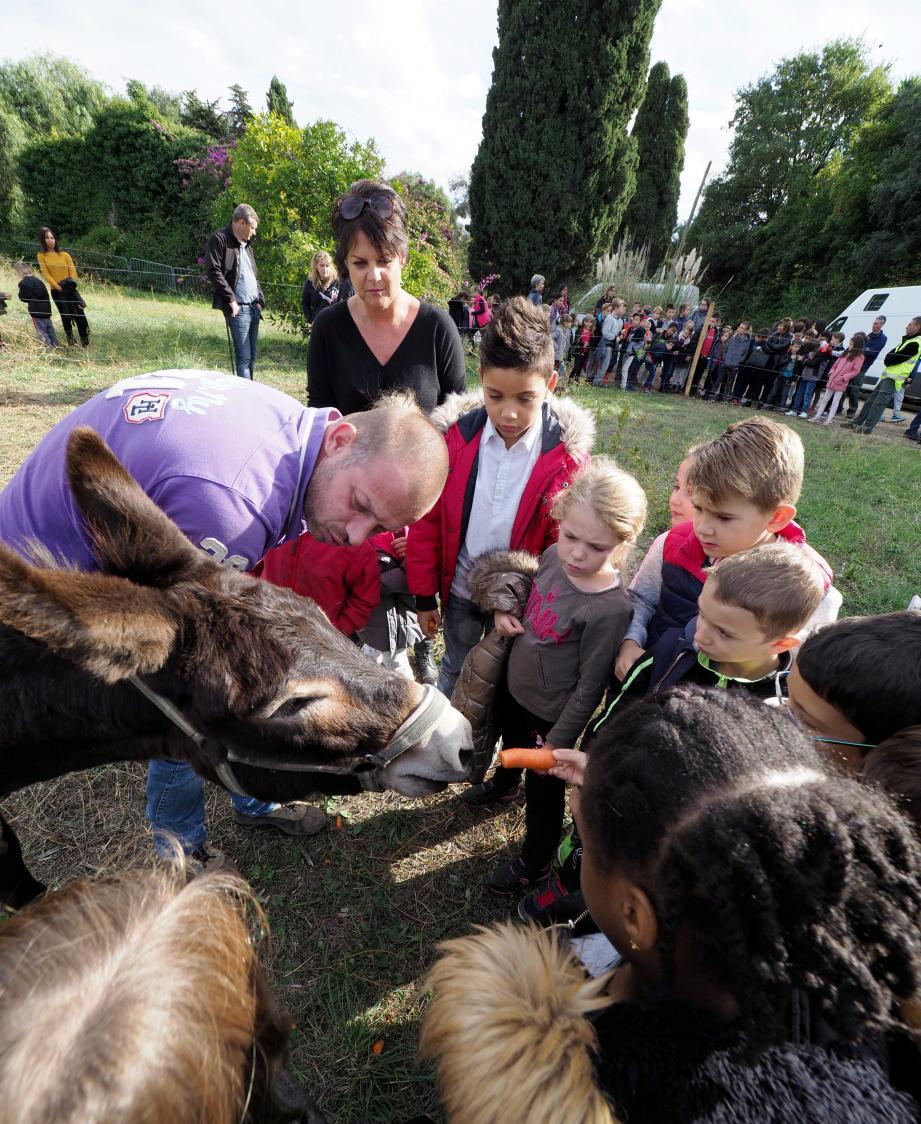 Beaucoup d'amour pour les deux ânes adoptés !