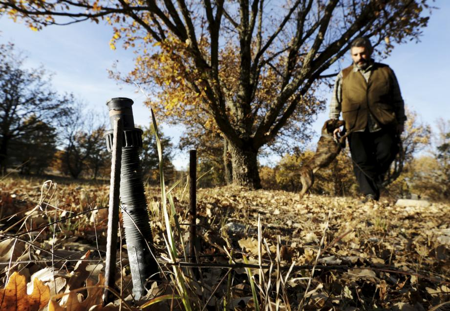 Seules les truffières équipées d'un d'arrosage, comme ici au domaine de Majastre à Bauduen, ont donné quelques truffes. Ce système particulier représente seulement 5 % de la production en France.