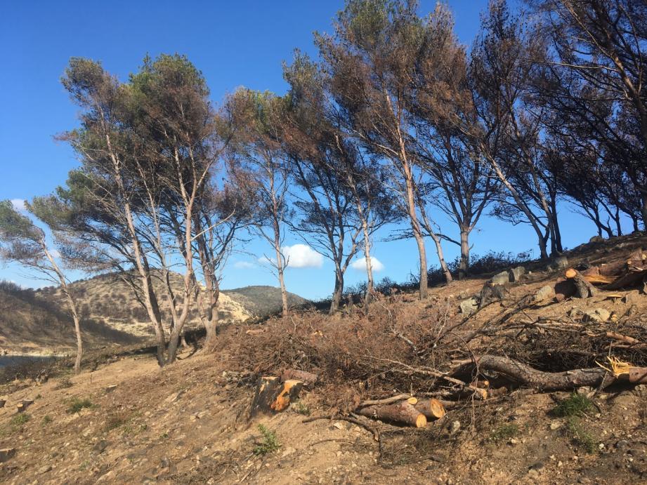 Une poignée d'arbres ne sera pas abattue sur le Cap. Mais sans leur écran végétal de protection, ils risquent de ne pas résister.