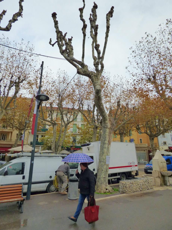 Malgré les soins, le platane situé près de la fontaine ne devrait pas passer pas l'automne.