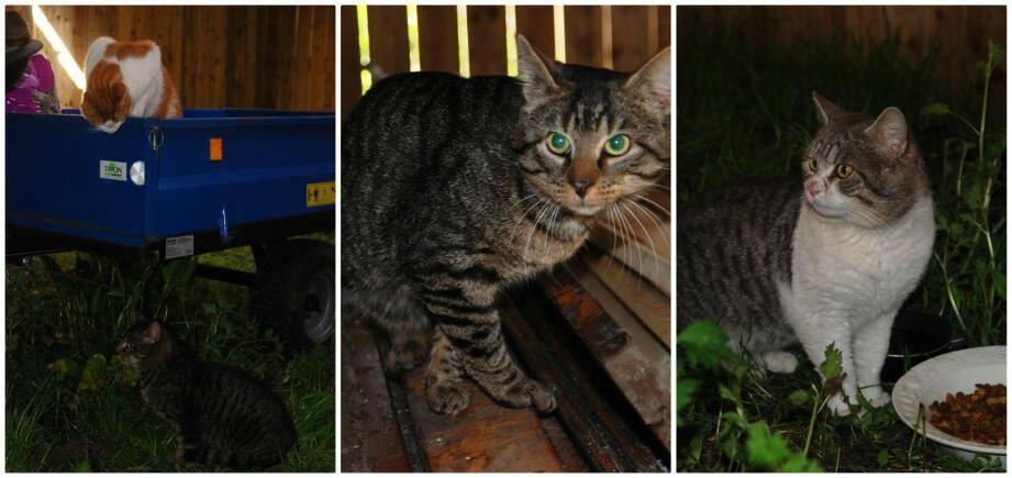 La brigade de chats anti-rongeurs