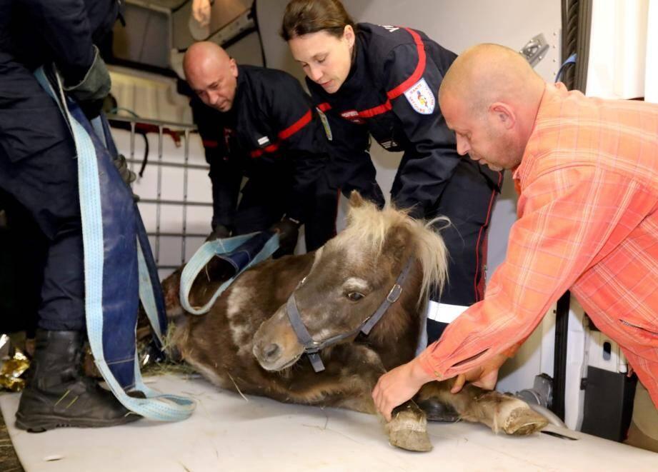 Prise en charge d'un poney blessÈ par la Clinique VÈtÈrinaire ¿quine de líHippodrome de Cagnes