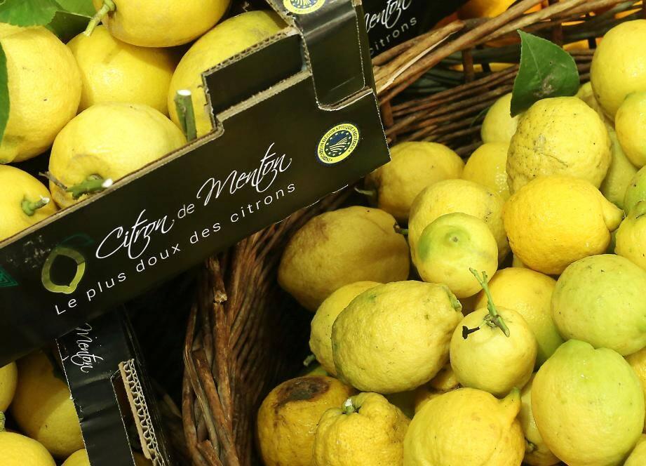 Le potentiel du Citron de Menton n'est pas suffisament exploité. J.-P. Laurès entend changer les choses.