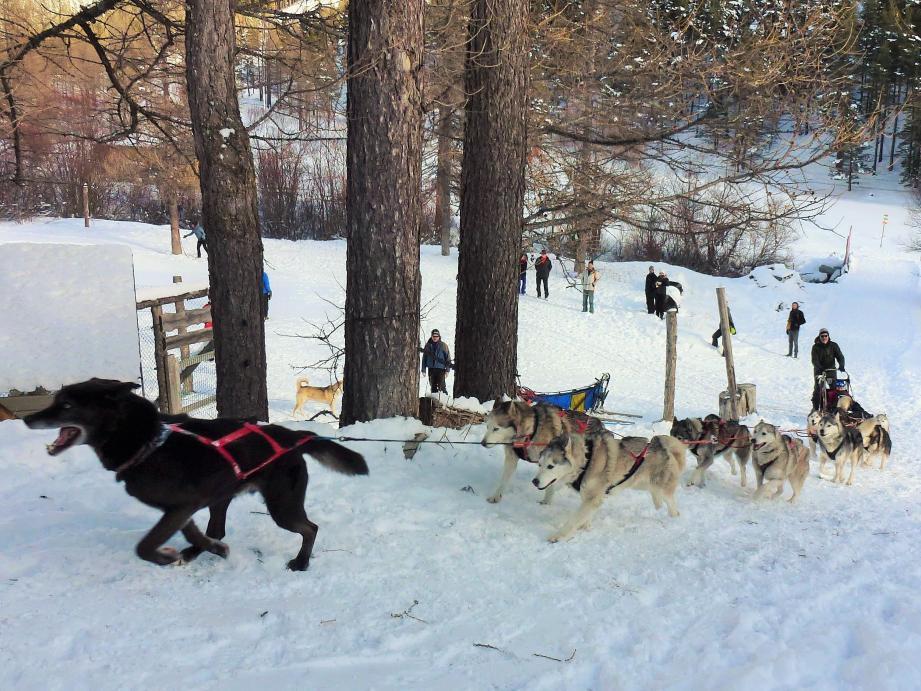 Dans la petite station de Castérino, mushers et huskies sont au rendez-vous hiver comme été.