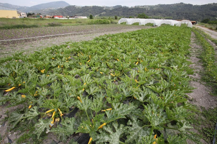 Certains agriculteurs se passent des produits chimiques pour cultiver D'autres disent souffrir d'être pointés du doigt parce qu'ils les utilisent encore.
