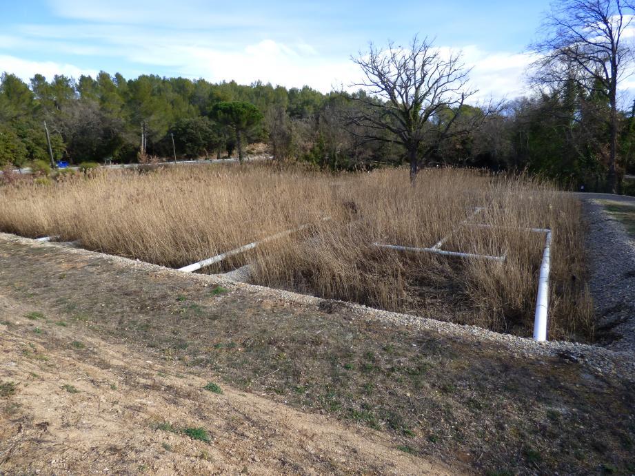 Une seconde filtration naturelle est réalisée dans ces lits plantés de roseaux, pour un traitement économe et soucieux de l'environnement.