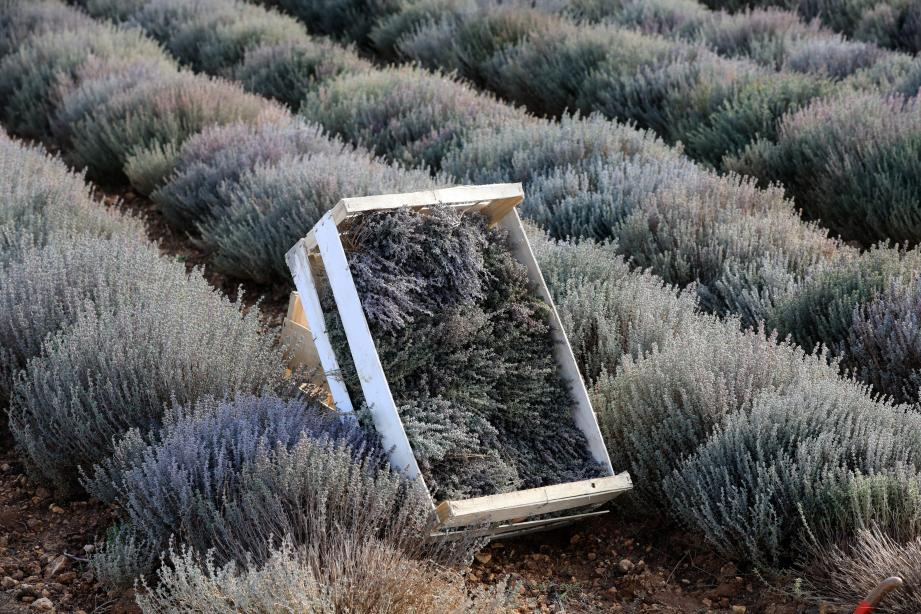 Planter, désherber, récolter, conditionner, vendre… La jeune agricultrice travaille chaque mois de l'année.