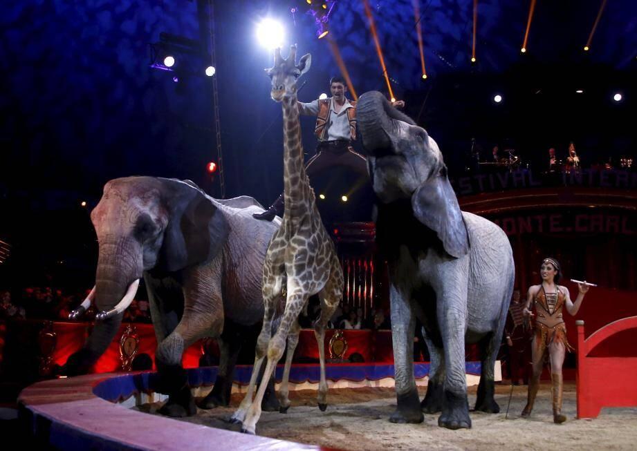 Ce grand tableau d'animaux décroche le clown d'or du 42e Festival du cirque de Monte-Carlo.