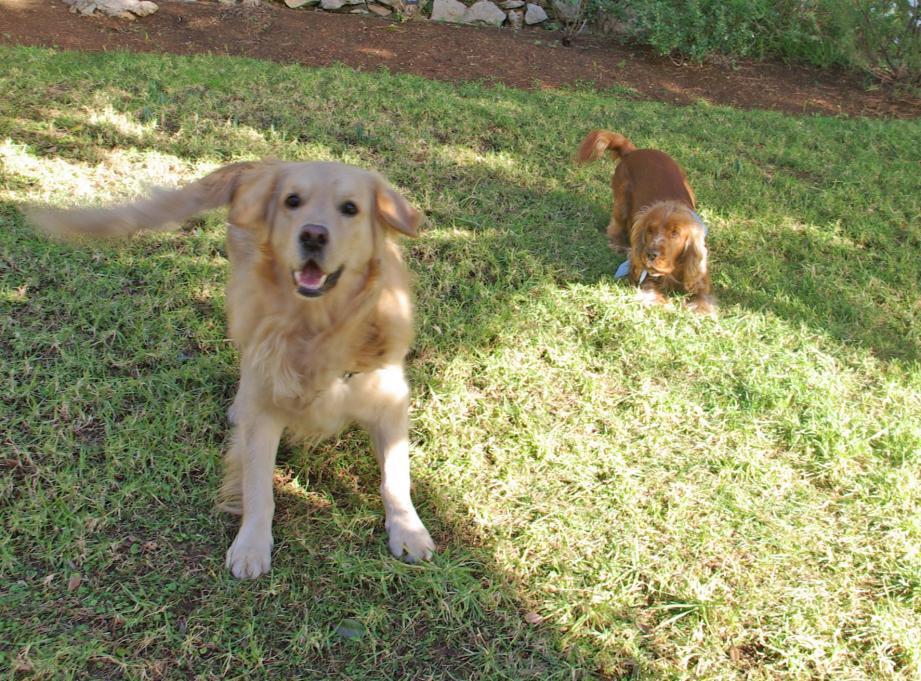 La rumeur de chiens empoisonnés s'est répandue sur les réseaux sociaux.